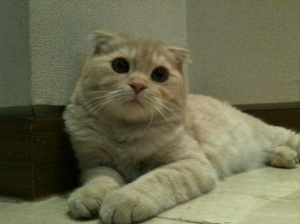 Idol Pet-11