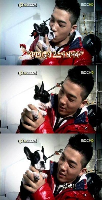 Kpop Pets Daftar Peliharaan Artis Kpop Korea Planet Cinta